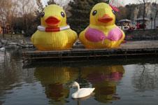 大黄鸭穿比基尼